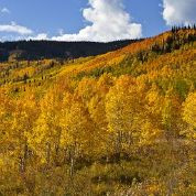 Capturing the Fall Colors of Colorado: Part 2