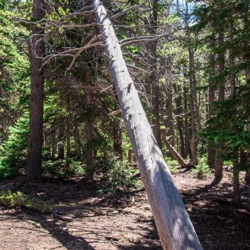 Help the Forest Service Improve the Trails